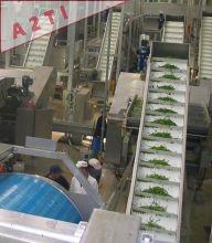 Ligne complète pour haricots verts